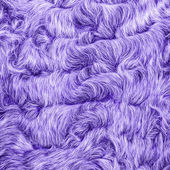 Peint violet fourrure naturelle closeup — Photo