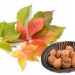 Autumn leaves with walnuts — Stock Photo