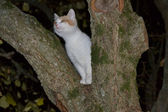 Nocturnal cat — Stock Photo