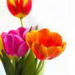 Royalty-Free Stock Photo: Flowers tulips
