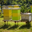 Stock Photo: Apiary in nature