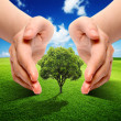Stock Photo: Earth Ecology