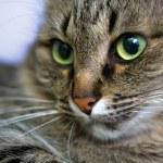 Portrait of green-eyed cat — Stock Photo