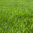 Closeup of cut grass — Stock Photo