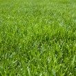 Closeup of cut grass — Stock Photo