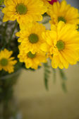 Yellow flowers closeup — Stock Photo
