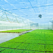 Modern greenhouse interior — Stock Photo #12346152