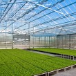 Stock Photo: Modern greenhouse interior