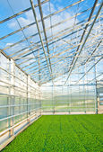Modern greenhouse interior — Stock Photo