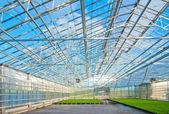 Interior del invernadero moderno — Foto de Stock