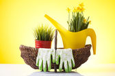 Wicker basket with garden gloves and spring flowers — Stock Photo