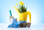 Gardening and cultivation concept — Stockfoto