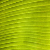 Green palm leaf pattern in the jungle backlit — Stock Photo