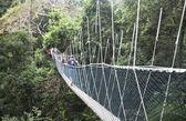 Canopy walkway. Taman Negara National Park. Malaysia — Stock Photo