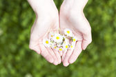Pland and flowers in hand, new life and protection concept — Stock Photo