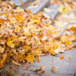 Background group autumn orange leaves. Outdoor — Stock Photo