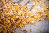 Background group autumn orange leaves. Outdoor — Stock Photo
