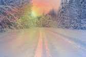Evening snow road in winter forest,sun shines through branches — Stock Photo