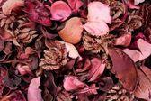 Dry aromatic flowers — Stock Photo