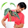 Stock Photo: Mwatering trees