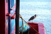 Seabird — Stock Photo