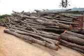 Wood logs — Stock Photo