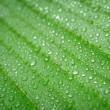 Banana leaf — Stock Photo #49196981