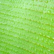 Banana leaf — Stock Photo #49197333