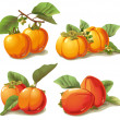 Set of ripe persimmon — Stock Vector #19745373