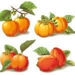 Set of ripe persimmon — Stock Vector #19745373