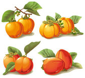 Set of ripe persimmon — Stock Vector