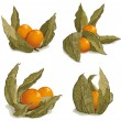 Set of ripe physalis — Stock Vector #20123671
