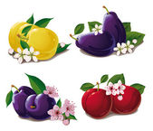 Set of ripe plums — Stock Vector