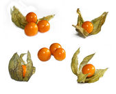 Set of ripe physalis — Stock Photo