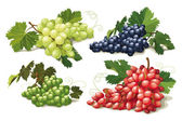 Set of ripe grapes — Stock Vector