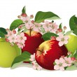 Royalty-Free Stock Vector Image: Still life of apples with flowers