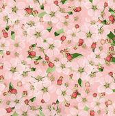 Apple の花の背景 — ストックベクタ
