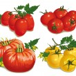 Set of different varieties of tomatoes — Stock Vector