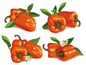 Set of orange pepper — Stock Vector