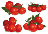 Set of tomatoes, bunch — Stock Vector