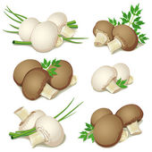 Set of champignon — Stock Vector