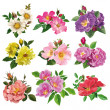 Set of colorful flowers of wild rose — Stock Vector #46076433