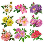 Set of colorful flowers of wild rose — Stock Vector