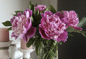 Bouquet of peonies on the table — Stock Photo