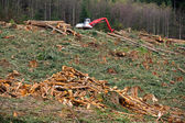 Clearcut Logging in Pacific Northwest — Stock Photo