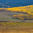 Fence Lines Leading to Aspens — Stock Photo