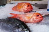 Colorful Fish at Market — Stock Photo