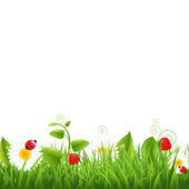 Grass Border With Ladybug And Leaf — Stock Vector