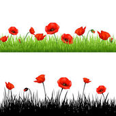 Border With Grass And Poppy — Stock Vector