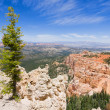 Bryce Canyon from the Rainbow Point — Stock Photo